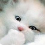 avatar Ankya