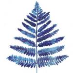 avatar BlueFern