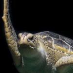 avatar l'univers d'une tortue