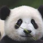 avatar Clemda
