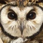 avatar Fliva23