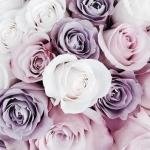 avatar Rose0908