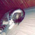 avatar Mademoiselle catastrophe