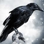 avatar Raven13