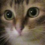 avatar Saint Just