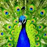 avatar James_Caron