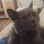avatar lila11