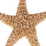 avatar stellade