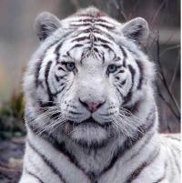 avatar scor13