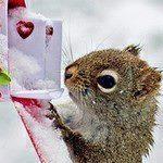 avatar Koda_joyandbooks