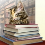 avatar Chat de Bibliothèques