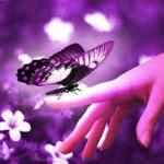 avatar papillonaudrey