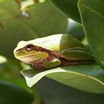 avatar Seja