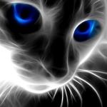 avatar Rikku