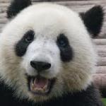 avatar BigPanda