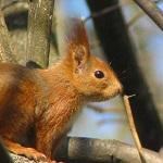 avatar L'écureuil