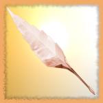 avatar Eclyan