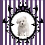 avatar Le Blog d'Océane