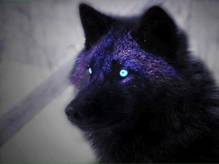 avatar Wolfy
