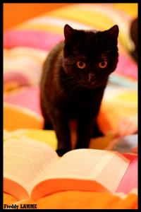 avatar Hyly's eBooks