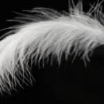 avatar Encre de plume