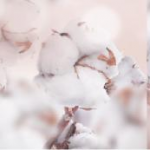 avatar Les lectures de coton