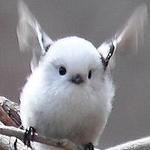 avatar BlackBird19