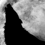 avatar Anisswolf