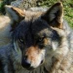 avatar Nelcie