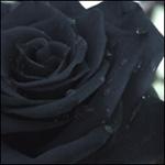 avatar Obsidienne
