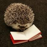 avatar Hedgehog_readings