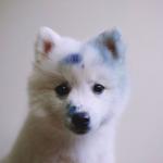 avatar BlueEden