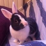 avatar BunnyMarty