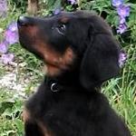 avatar Gibson