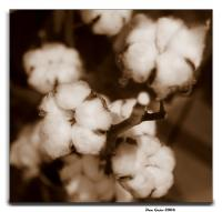 avatar Cottonflower
