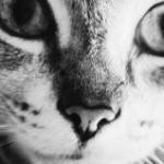 avatar Giulia
