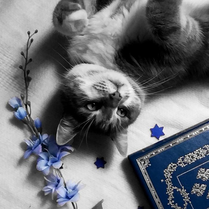 avatar Mélanie_wolf_book