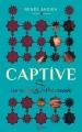 Couverture Captive, tome 1 : Les nuits de Shéhérazade Editions Hachette 2015